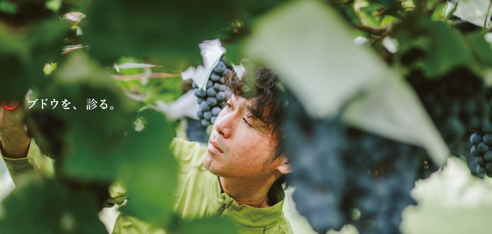 ブドウを、診る。