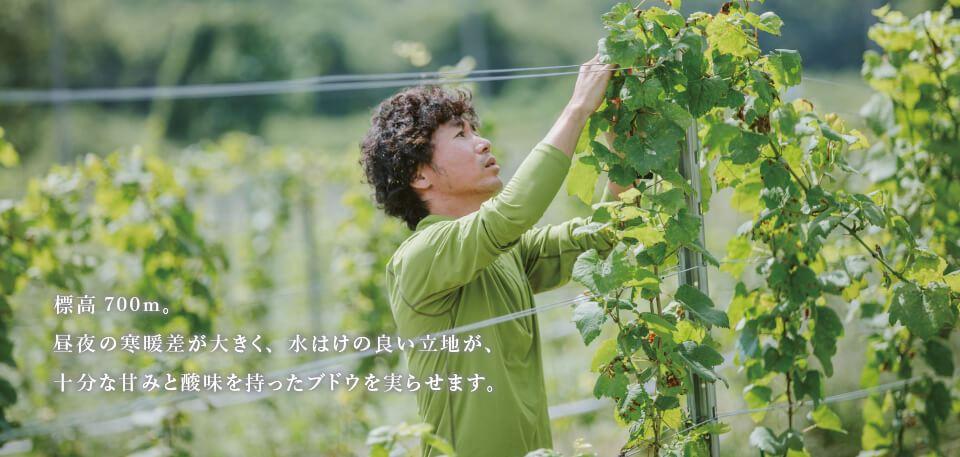 標高700m。昼夜の寒暖差が大きく、水はけの良い立地が、十分な甘みと酸味を持ったブドウを実らせます。